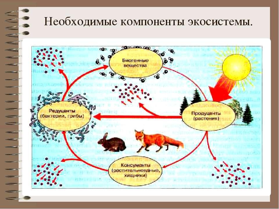 Необходимые компоненты экосистемы.