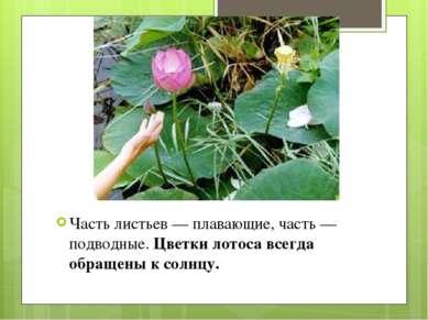 Часть листьев — плавающие, часть — подводные.Цветки лотоса всегда обращены к...