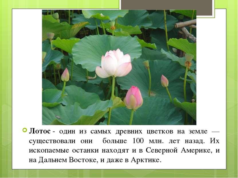 Лотос- один из самых древних цветков на земле — существовали они больше 100 ...