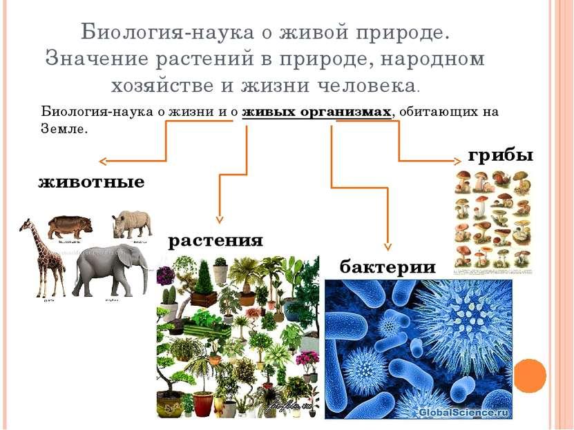 Биология-наука о живой природе. Значение растений в природе, народном хозяйст...