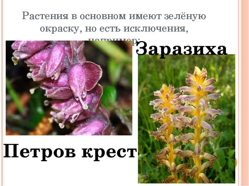 Растения в основном имеют зелёную окраску, но есть исключения, например: Петр...