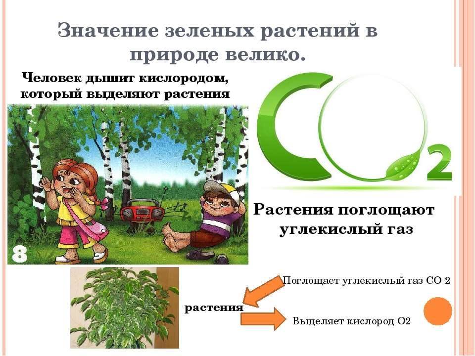 Значение зеленых растений в природе велико. Человек дышит кислородом, который...