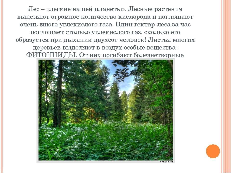 Лес – «легкие нашей планеты». Лесные растения выделяют огромное количество ки...
