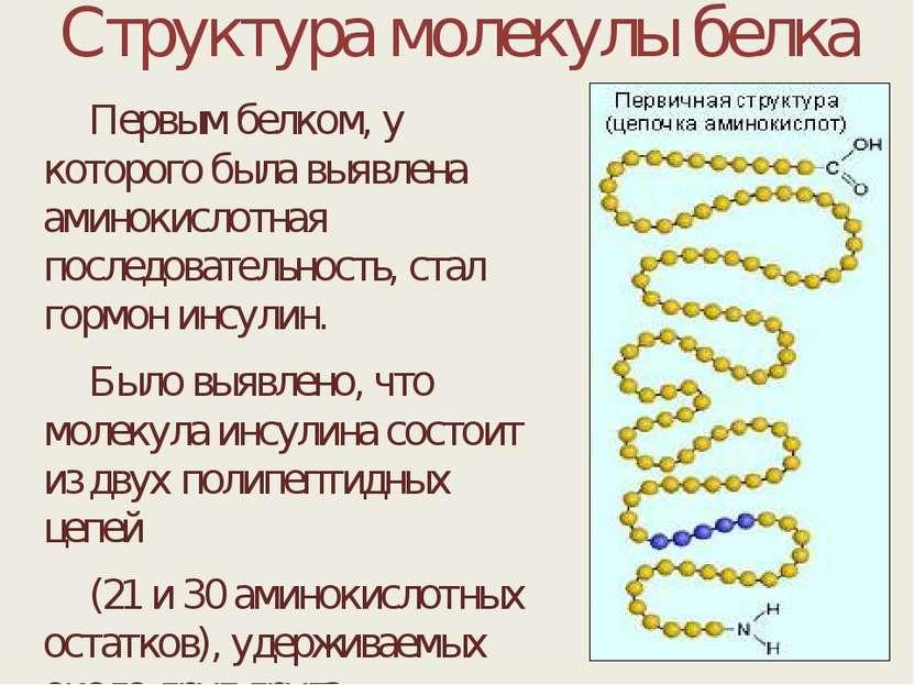 Структура молекулы белка Первым белком, у которого была выявлена аминокислотн...