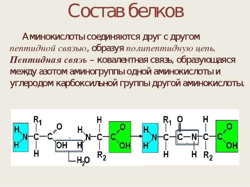 Состав белков Аминокислоты соединяются друг с другом пептидной связью, образу...