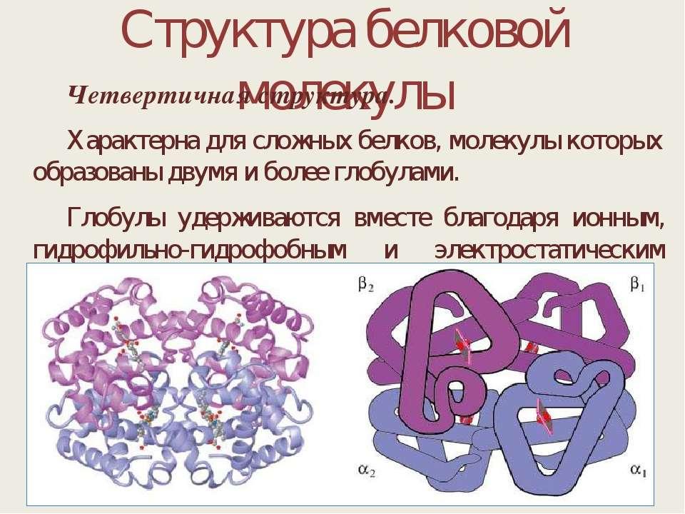 Структура белковой молекулы Четвертичная структура. Характерна для сложных бе...