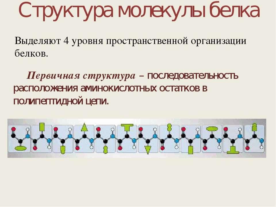 Структура молекулы белка Первичная структура – последовательность расположени...