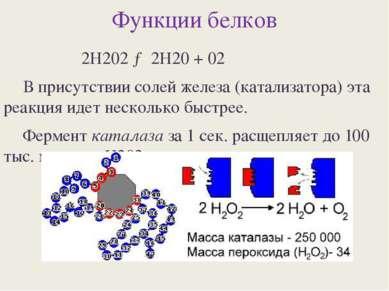 Функции белков 2Н202 → 2Н20 + 02 В присутствии солей железа (катализатора) эт...