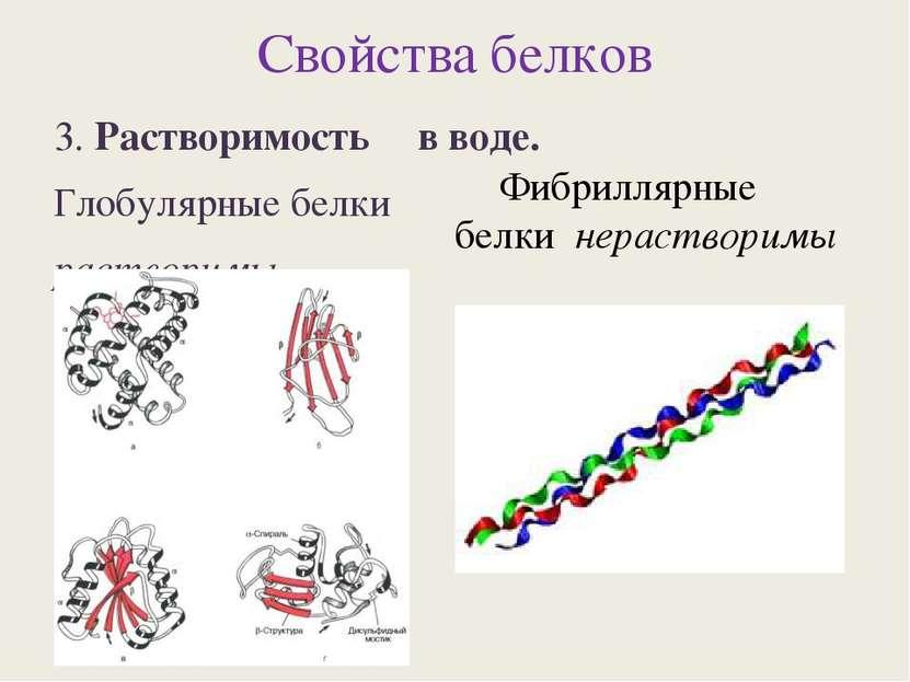 Свойства белков 3. Растворимость в воде. Глобулярные белки растворимы Фибрилл...