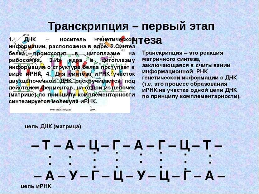 Транскрипция – первый этап биосинтеза – Т – А – Ц – Г – А – Г – Ц – Т – – А –...