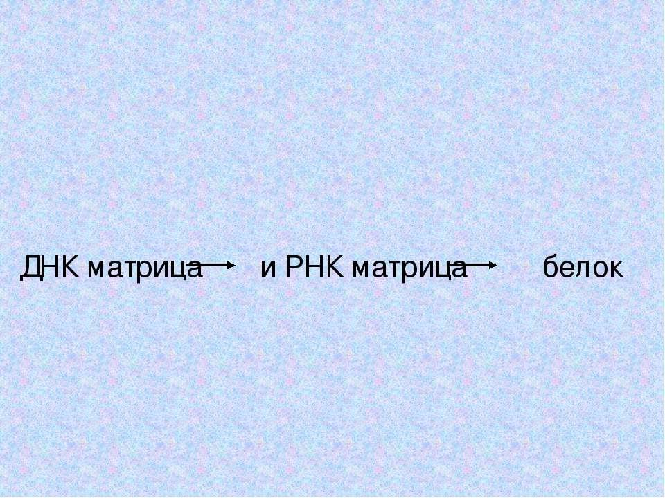 ДНК матрица и РНК матрица белок