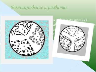 Меры борьбы Протравливание семян, дезинфекция саженцев и черенков, почвы в па...