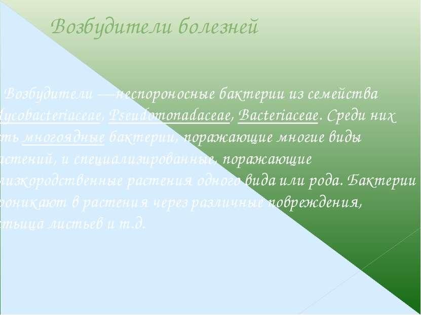 Передача возбудителей Передача возбудителей бактериозов возможна с семенами (...