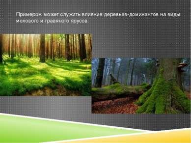 Примером может служить влияние деревьев-доминантов на виды мохового и травяно...