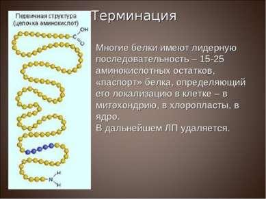 Многие белки имеют лидерную последовательность – 15-25 аминокислотных остатко...
