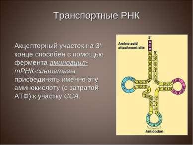 Транспортные РНК Акцепторный участок на 3'-конце способен с помощью фермента ...