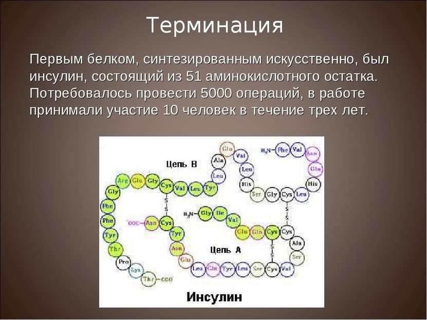 Первым белком, синтезированным искусственно, был инсулин, состоящий из 51 ами...