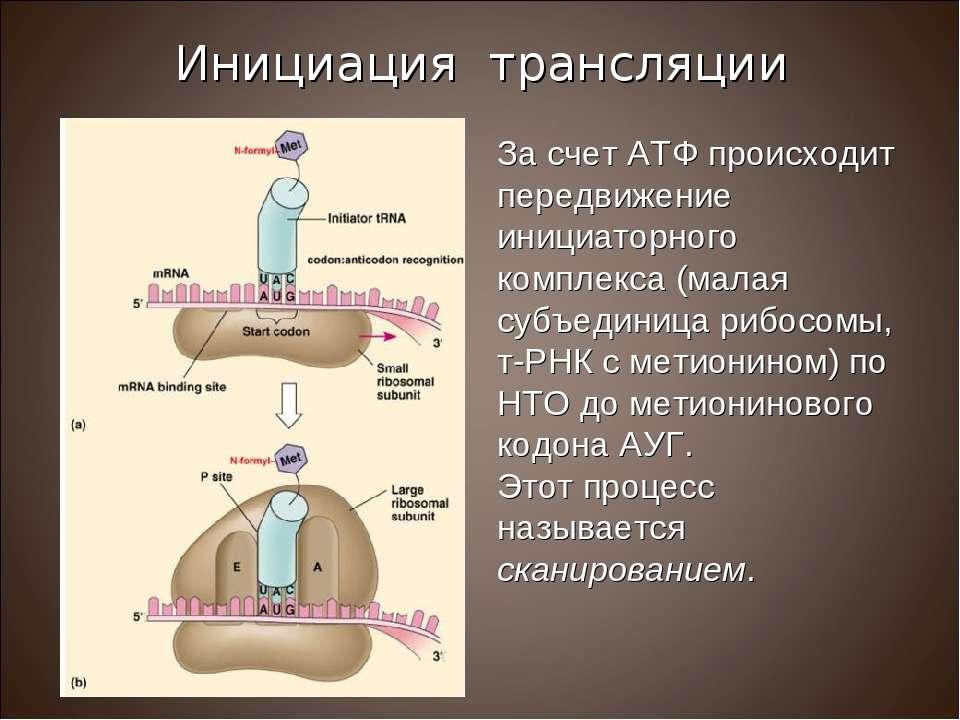 За счет АТФ происходит передвижение инициаторного комплекса (малая субъединиц...