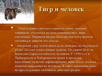 Тигр и человек Тигр издавна считался одним из самых опасных хищников, охотить...