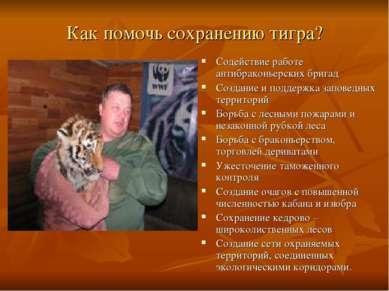 Как помочь сохранению тигра? Содействие работе антибраконьерских бригад Созда...
