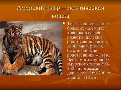 Амурский тигр – экзотическая кошка Тигр – один из самых больших наземных хищн...