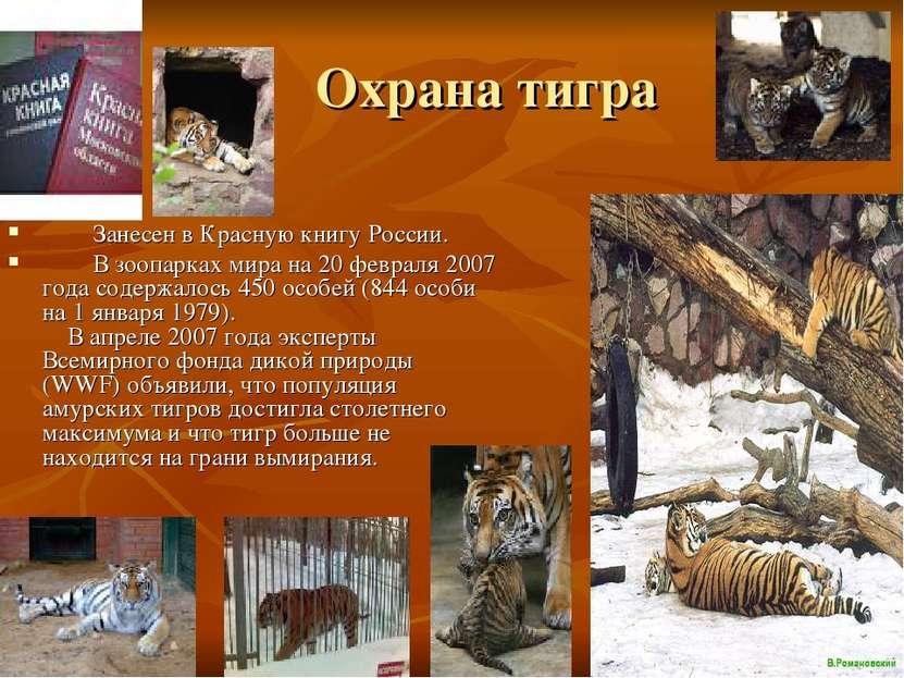 Охрана тигра Занесен в Красную книгу России. В зоопарках мира на 20 февраля 2...