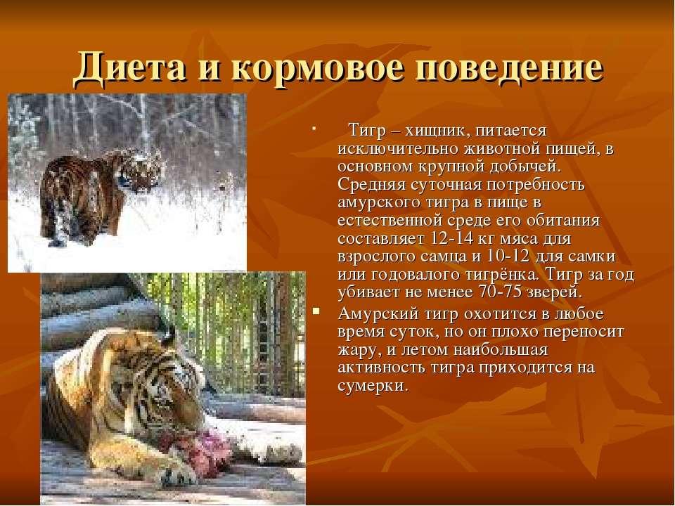 Диета и кормовое поведение Тигр – хищник, питается исключительно животной пищ...