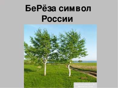 БеРёза символ России Выполнил ученик 6 «Б» Феоктистов Влад