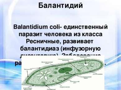 Балантидий Balantidium coli- единственный паразит человека из класса Ресничны...