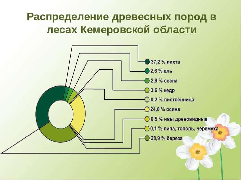 Распределение древесных пород в лесах Кемеровской области
