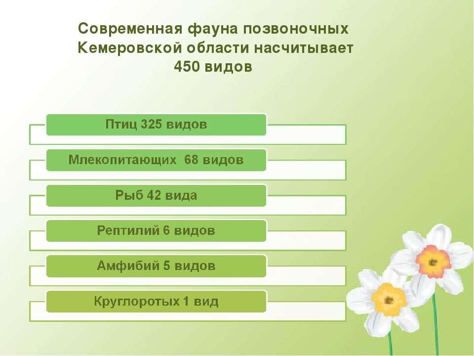 Современная фауна позвоночных Кемеровской области насчитывает 450 видов