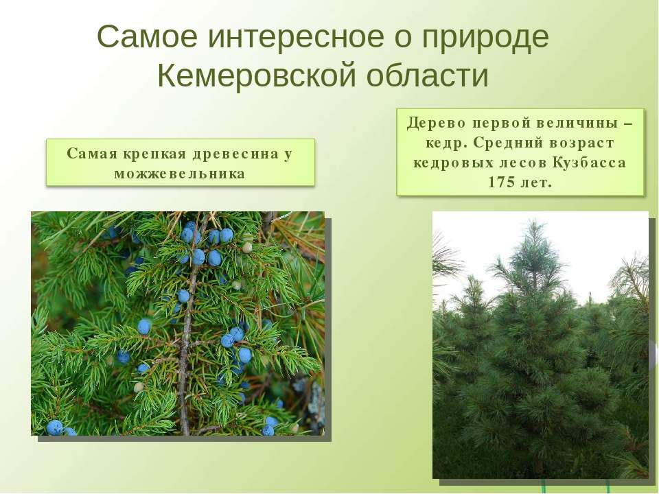 Самое интересное о природе Кемеровской области