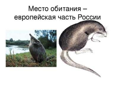 Место обитания – европейская часть России