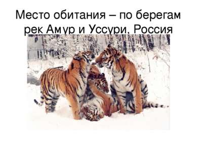 Место обитания – по берегам рек Амур и Уссури, Россия