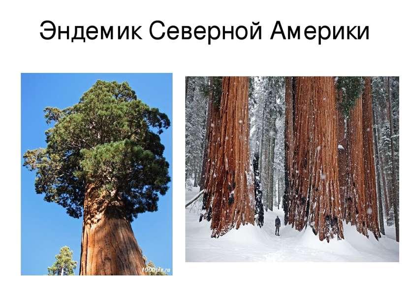Эндемик Северной Америки
