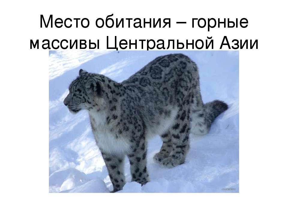 Место обитания – горные массивы Центральной Азии