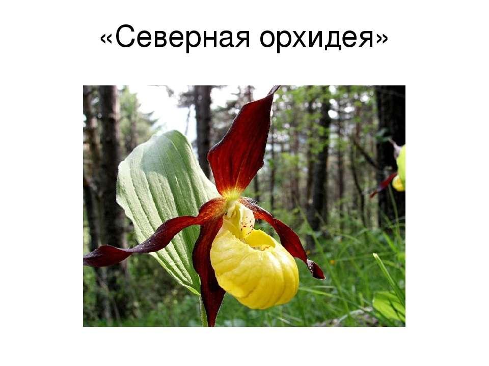 «Северная орхидея»
