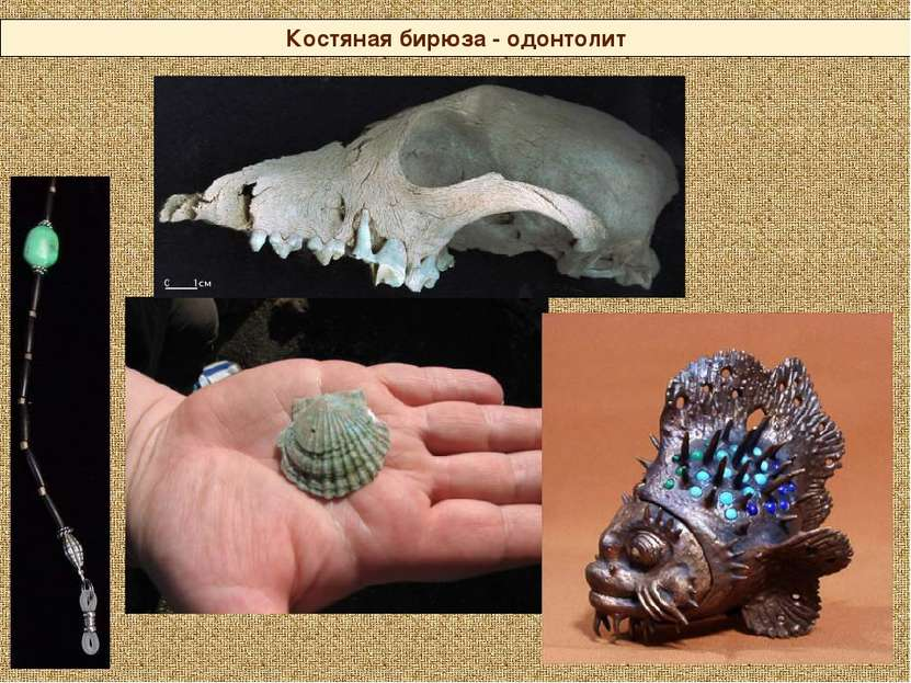 Костяная бирюза - одонтолит