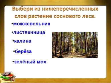 можжевельник лиственница калина берёза зелёный мох