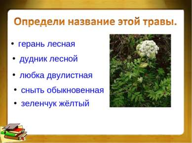 герань лесная дудник лесной любка двулистная сныть обыкновенная зеленчук жёлтый