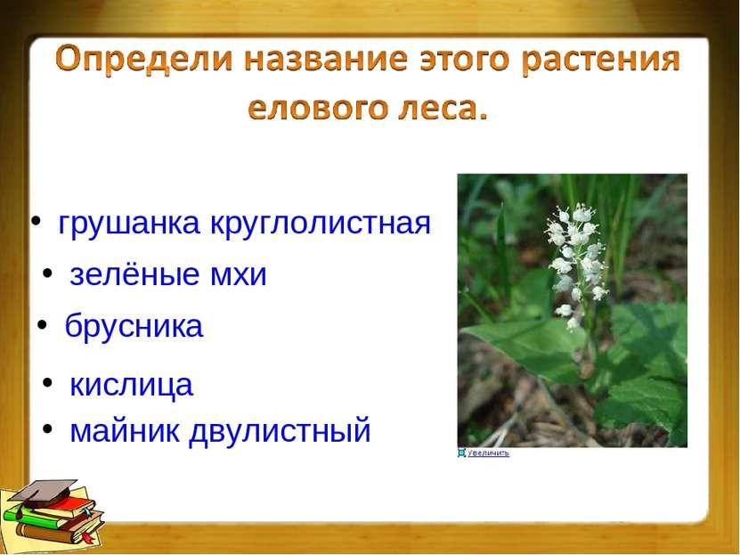 брусника грушанка круглолистная зелёные мхи майник двулистный кислица