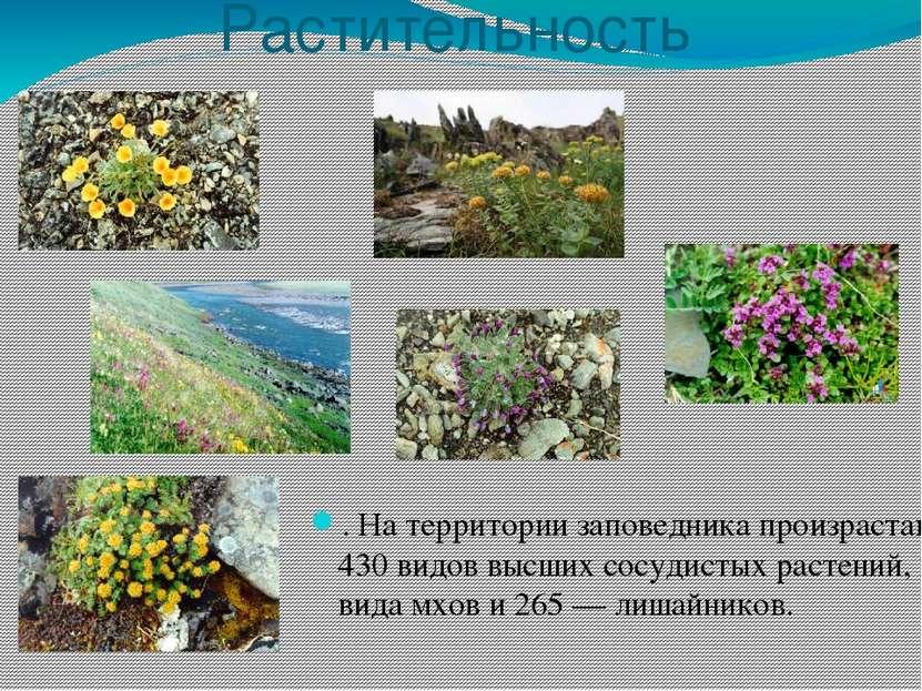 Растительность . На территории заповедника произрастают 430 видов высших сосу...