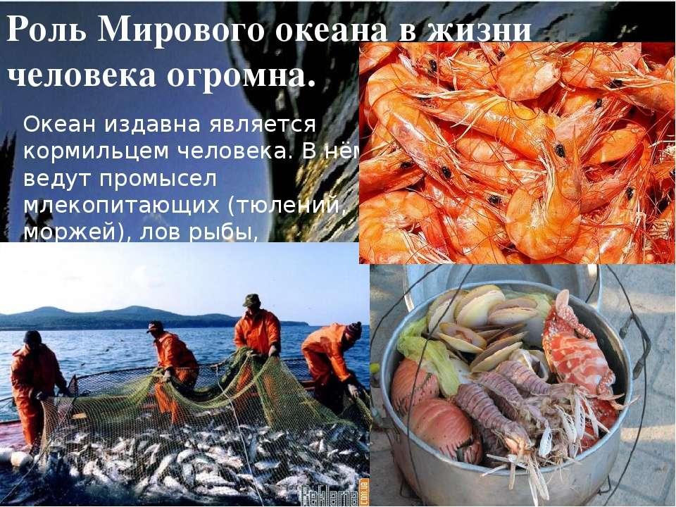 Роль Мирового океана в жизни человека огромна. Океан издавна является кормиль...