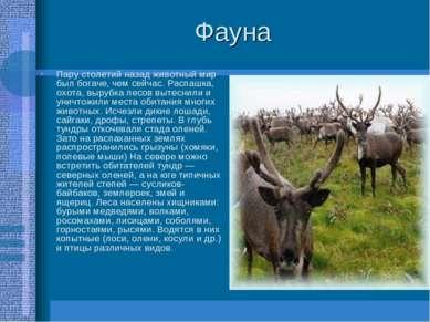 Фауна Пару столетий назад животный мир был богаче, чем сейчас. Распашка, охот...