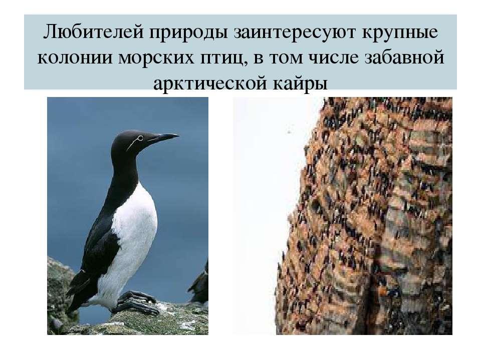 Любителей природы заинтересуют крупные колонии морских птиц, в том числе заба...