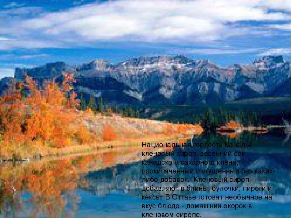 Национальная гордость Канады - кленовый сироп, весенний сок канадского сахарн...