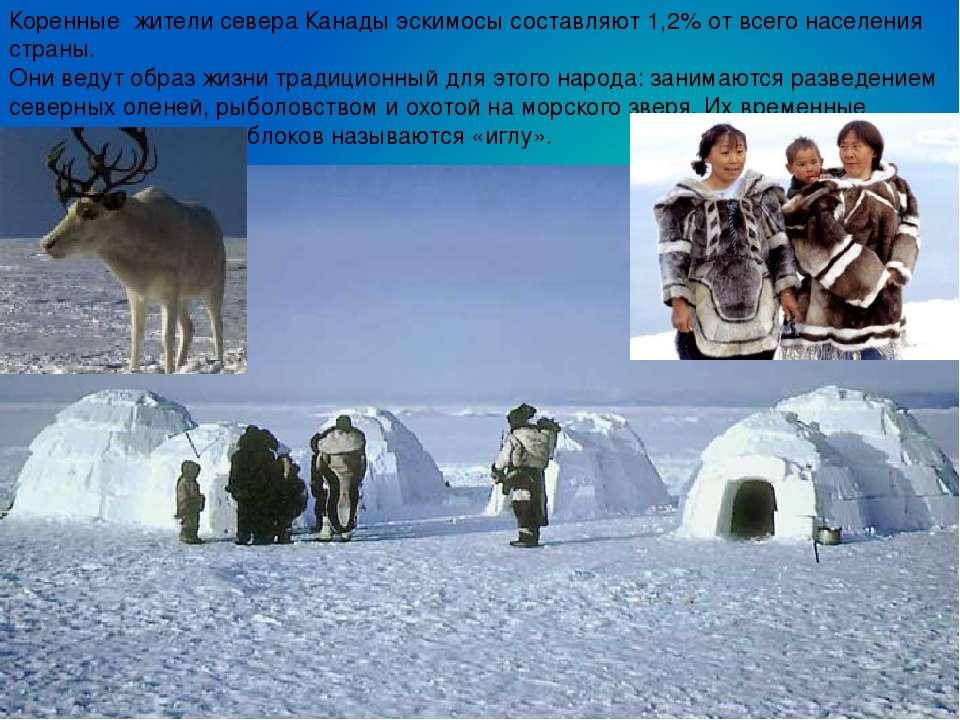 Коренные жители севера Канады эскимосы составляют 1,2% от всего населения стр...