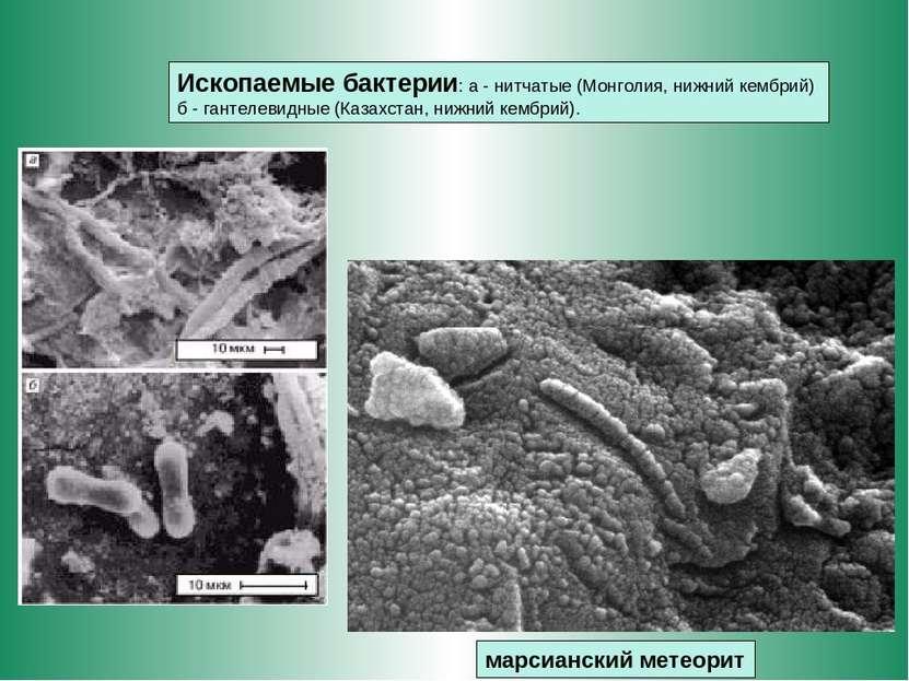 марсианский метеорит Ископаемые бактерии: а - нитчатые (Монголия, нижний кемб...