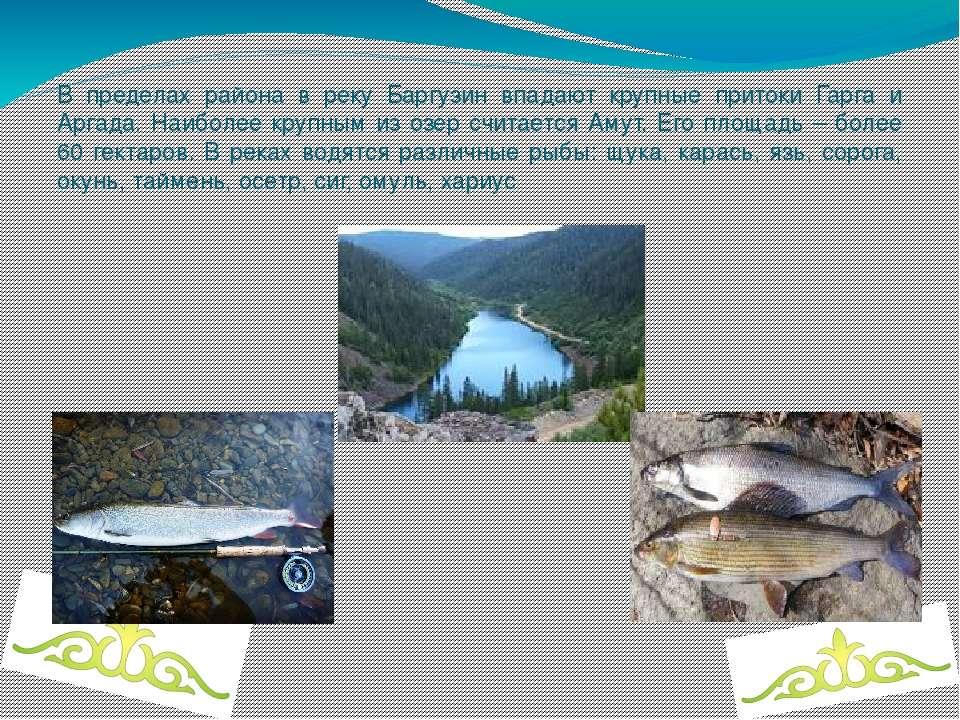 В пределах района в реку Баргузин впадают крупные притоки Гарга и Аргада. Наи...