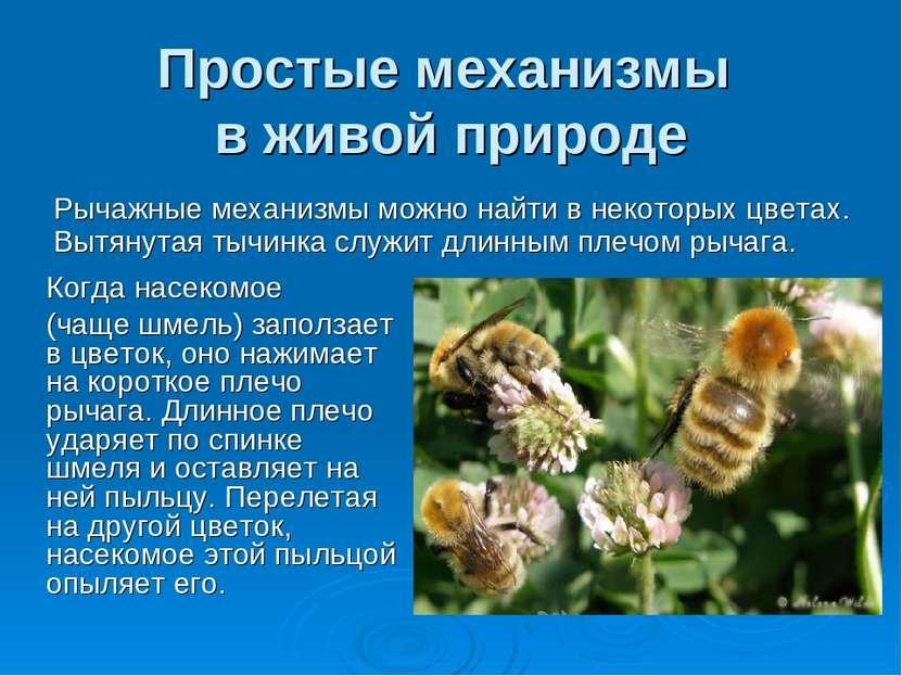 Простые механизмы в живой природе Рычажные механизмы можно найти в некоторых ...